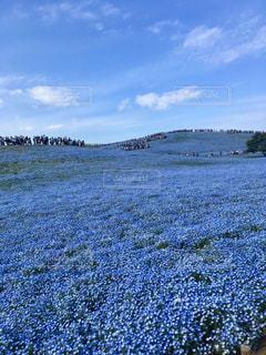 お花畑の写真・画像素材[1102677]