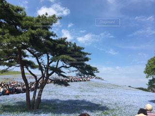 青い花と青空の写真・画像素材[1103838]