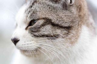 猫のアップの写真・画像素材[1255571]