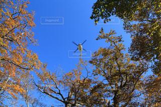 自然,空,秋,ヘリコプター,秋空,大台ヶ原