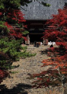 秋,紅葉,京都,階段,寺,神護寺