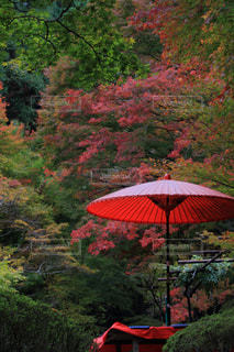 秋,紅葉,京都,寺,神護寺