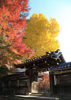 紅葉,屋外,神社,もみじ,樹木,イチョウ,奈良,奈良公園