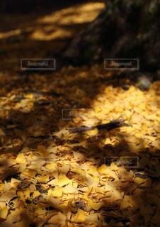影,光,落ち葉,樹木,イチョウ,奈良,奈良公園