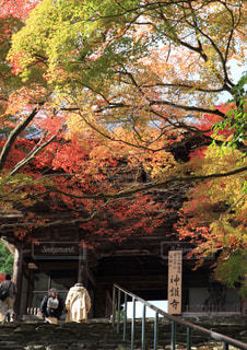 秋,紅葉,屋外,京都,もみじ,樹木,神護寺