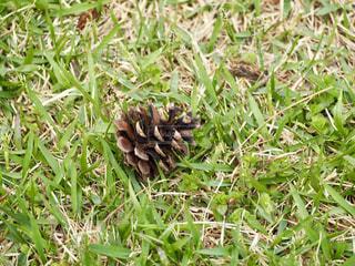 緑と茶色の草の写真・画像素材[1197089]