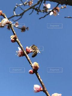 木の枝にとまった鳥 - No.1105104