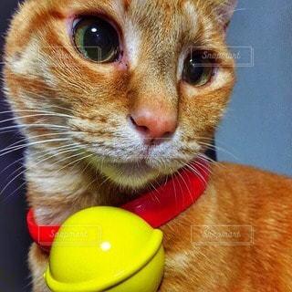 猫の写真・画像素材[34947]