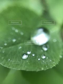 公園,雨,傘,屋外,水滴,景色,長靴,梅雨,お散歩,雨音,お写んぽ
