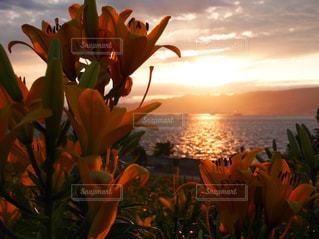 オレンジの写真・画像素材[1123263]