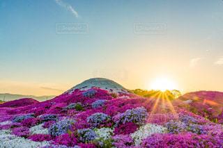 芝桜富士の写真・画像素材[1144009]