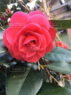 近くの花のアップの写真・画像素材[1200852]