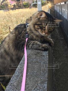 建物の前に立っている猫の写真・画像素材[1255267]