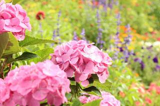 近くの花のアップの写真・画像素材[1258735]