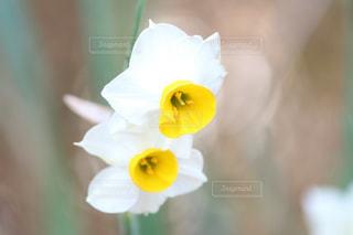 近くに黄色い花のアップの写真・画像素材[1368123]