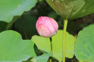 近くの緑の植物をの写真・画像素材[1368139]