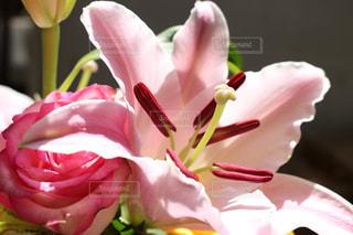 植物にピンクの花の写真・画像素材[1435351]