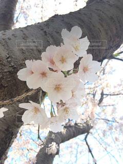 花の写真・画像素材[1435357]