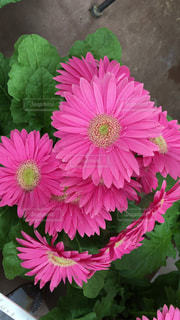 近くの花のアップの写真・画像素材[1435358]