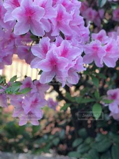 近くの花のアップの写真・画像素材[1435360]