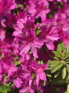 近くの花のアップの写真・画像素材[1435362]