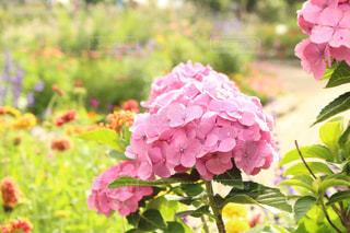 近くの花のアップの写真・画像素材[1801287]