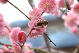 近くの花のアップの写真・画像素材[1810950]