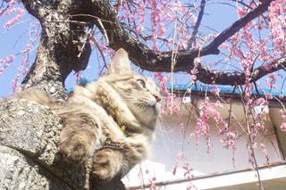 木の上に横になっている猫の写真・画像素材[1826943]