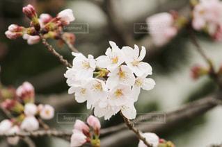 近くの花のアップの写真・画像素材[1831992]