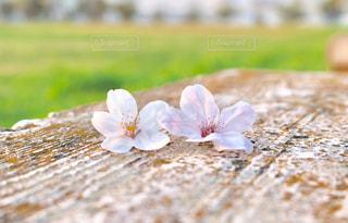 近くの花のアップの写真・画像素材[1831993]