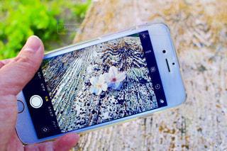 携帯電話を持つ手の写真・画像素材[1831994]