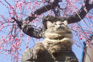木の上に座っている猫の写真・画像素材[1860641]