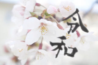 近くの花のアップの写真・画像素材[1884849]