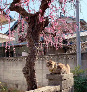 建物の上に座っている猫の写真・画像素材[2141585]