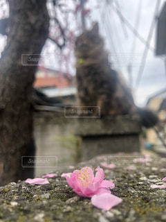ピンクの花の写真・画像素材[2141589]