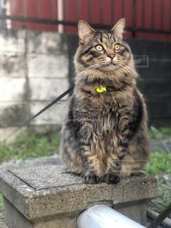 木製のフェンスの上に座っている猫の写真・画像素材[2293008]