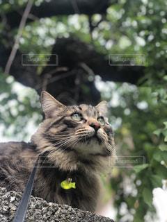 庭に座っている猫の写真・画像素材[2293024]