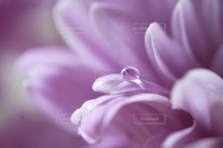 花のクローズアップの写真・画像素材[2134391]