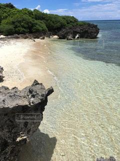 波照間島の浜シタン群落の写真・画像素材[2334392]