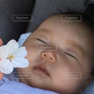 こどもの寝顔に桜を添えての写真・画像素材[1162377]