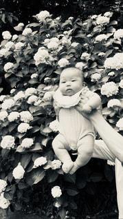 花,モノクロ,子供,レトロ,紫陽花,こどもの日,赤ちゃん,こども,梅雨,子どもの日