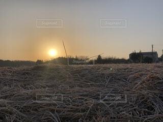 自然,風景,空,冬,屋外,太陽,朝日,綺麗,オレンジ,草,朝焼け,眩しい,朝,日の出,早朝,天気,草木,そら,一月