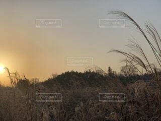 自然,風景,空,冬,屋外,太陽,綺麗,オレンジ,草,朝焼け,眩しい,朝,日の出,早朝,天気,草木,そら