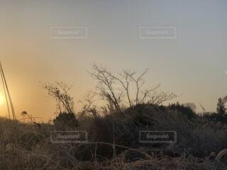 自然,風景,空,冬,屋外,太陽,朝日,綺麗,オレンジ,草,朝焼け,眩しい,正月,朝,お正月,日の出,早朝,天気,新年,草木,そら,一月