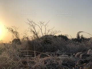 自然,風景,空,冬,屋外,太陽,朝日,綺麗,オレンジ,草,朝焼け,眩しい,正月,朝,お正月,日の出,早朝,天気,新年,初日の出,草木,そら,一月