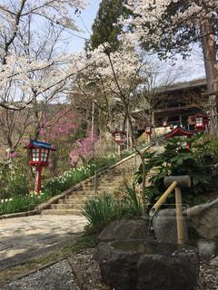 自然,桜,綺麗,景色,旅行,寺,山梨県,大善寺