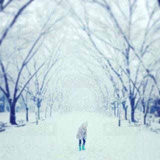 雪の写真・画像素材[202620]