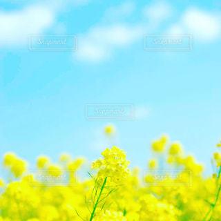 春の写真・画像素材[426509]