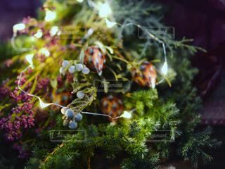 近くの花のアップ - No.935179