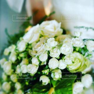 近くの花のアップの写真・画像素材[935730]